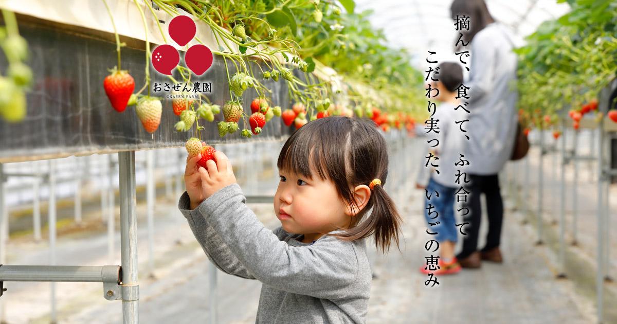 お さ ぜん 農園 いちご狩り おさぜん農園 京都八幡市にあるいちごの観光農園です
